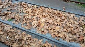 Высушенные листья в железных дорогах стоковая фотография rf
