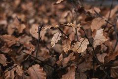 Высушенные листья в зиме, селективном мягком фокусе Стоковые Изображения RF