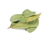 Высушенные листья залива Стоковые Изображения RF