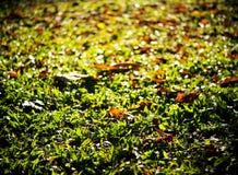 Высушенные листья листают падающ на пол сада или джунглей Стоковое фото RF