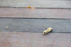 Высушенные листья которые падают на деревянный пол Стоковая Фотография