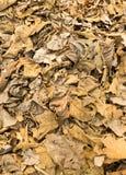 Высушенные листья на земле Стоковая Фотография RF