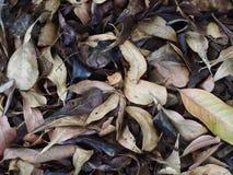 Высушенные листья на поле сада Стоковое Фото