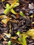 Высушенные листья на поле сада Стоковые Изображения RF
