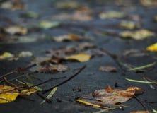 Высушенные листья на поле сада Стоковые Изображения