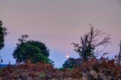 Высушенные листья на поле Стоковое фото RF