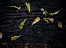 Высушенные листья на стенде сада Стоковое фото RF