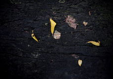 Высушенные листья на стенде сада Стоковое Фото