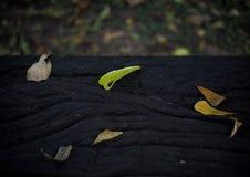 Высушенные листья на стенде сада Стоковое Изображение RF