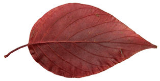 Высушенные листья падения заводов, цветков и ветвей, изолировали elem Стоковое Фото