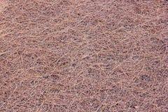Высушенные листья предпосылки сосны на том основании Стоковая Фотография RF