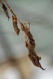 Высушенные листья Цветки в зиме Стоковая Фотография RF