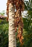 Высушенные листья стоковые фотографии rf