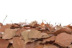 Высушенные листья Стоковое Фото