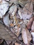 высушенные листья стоковая фотография