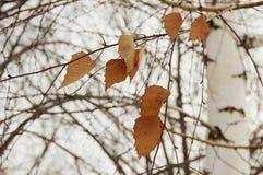 Высушенные листья Стоковые Изображения