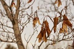 Высушенные листья Стоковые Фото