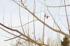 Высушенные листья Стоковое фото RF