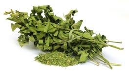 Высушенные листья moringa Стоковая Фотография RF