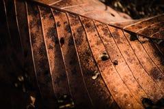 Высушенные лист с капельками Стоковые Изображения