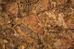 Высушенные лист Стоковая Фотография RF
