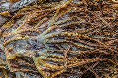 высушенные кальмары стоковое фото rf