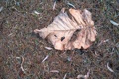 Высушенные коричневые лист упаденные на землю высушенной травы 2 стоковое изображение