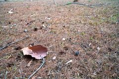Высушенные коричневые лист упаденные на землю высушенной травы 3 стоковые изображения