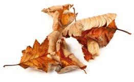 высушенные листья группы падения Стоковая Фотография