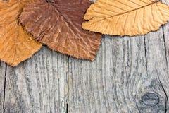 Высушенные листья желтого цвета и апельсина на деревянном столе grunge старом Стоковое Изображение RF