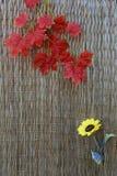 Высушенные листья и желтый цветок на hassock Стоковая Фотография RF