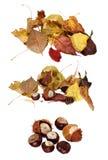 Высушенные листья и каштан крупный план Стоковое Изображение RF