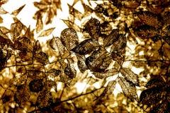 Высушенные листья на валах Стоковое фото RF