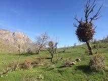Высушенные листья на дереве стоковое фото rf