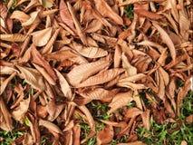 Высушенные листья на поле стоковая фотография