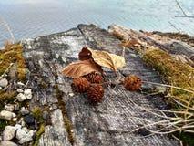 Высушенные листья на старом дереве стоковое фото rf