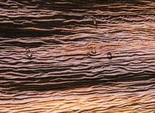 высушенные листья падений Стоковые Фотографии RF