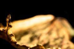 высушенные листья падения Стоковое Изображение