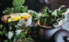 Высушенные листья смородины в глиняном горшке, лимоны, сезон холодов Стоковые Изображения