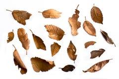 высушенные листья Стоковое Изображение