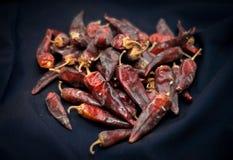 Высушенные накаленные докрасна перцы chili лежат в куче, glitering с различными тенями красного цвета Стоковое фото RF