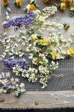 Высушенные надушенные цветки Стоковые Изображения RF