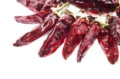 Высушенные перцы chili Стоковое Изображение