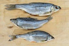 Высушенные посоленные рыбы плотвы Стоковое фото RF