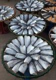 Высушенные посоленные рыбы damsel стоковое изображение rf