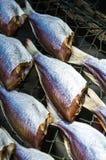 Высушенные посоленные рыбы на сети веревочки Стоковое фото RF