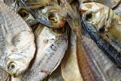 высушенные посоленные рыбы Стоковое фото RF