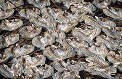 Высушенные посоленные рыбы Стоковая Фотография
