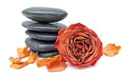 Высушенные розовая и камено стоковое фото