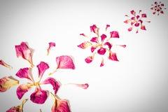 Высушенные розовые лепестки Стоковые Изображения RF